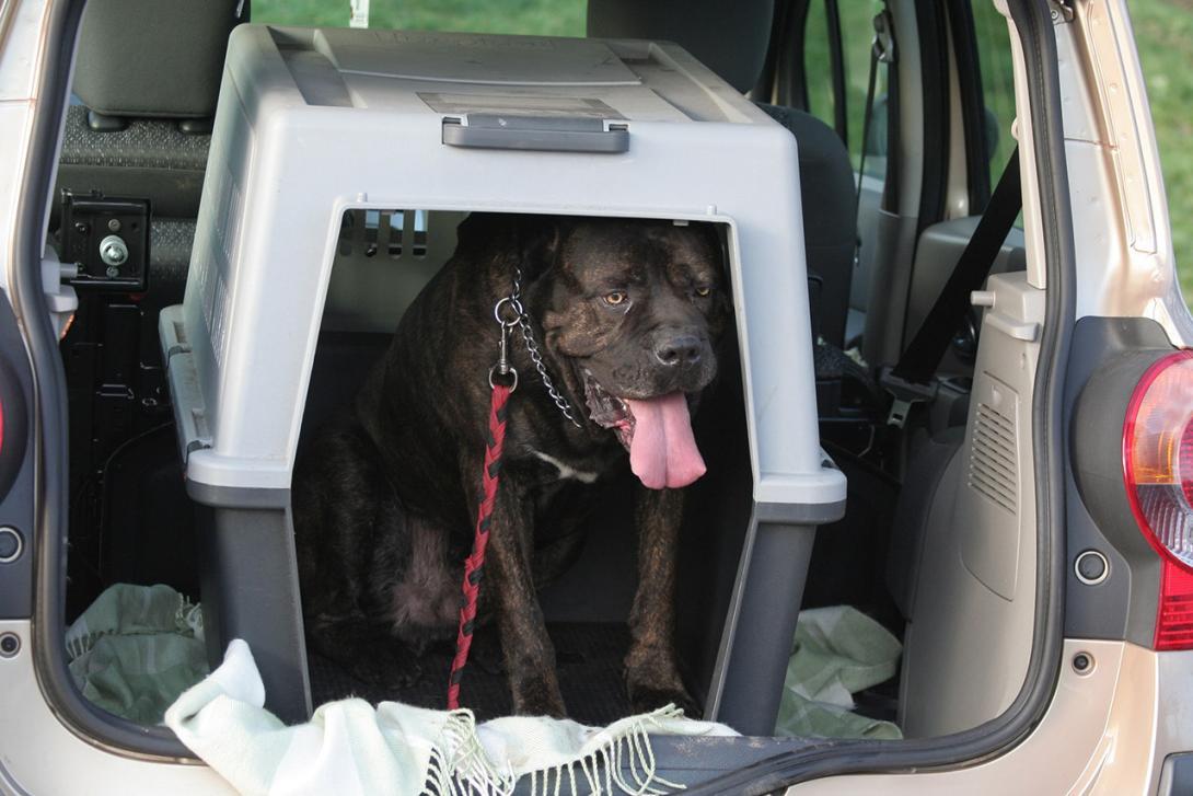 Přeprava zvířete v přepravním boxu v kufru auta