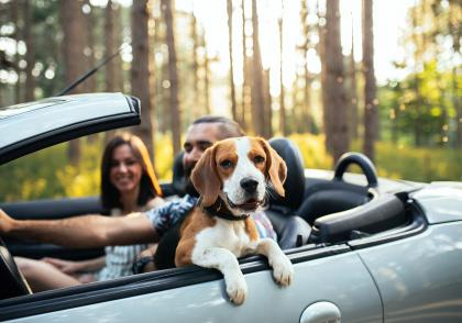 Víte, jak přepravovat v autě vaše mazlíčky?